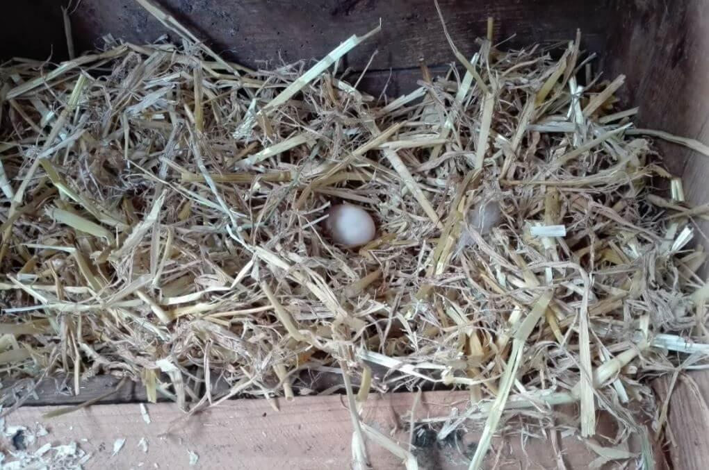 das erste ei im nest