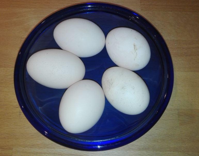 Wie viele Eier legen Seidenhühner?
